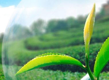 Agricultural Products Trademarks Registration in Vietnam